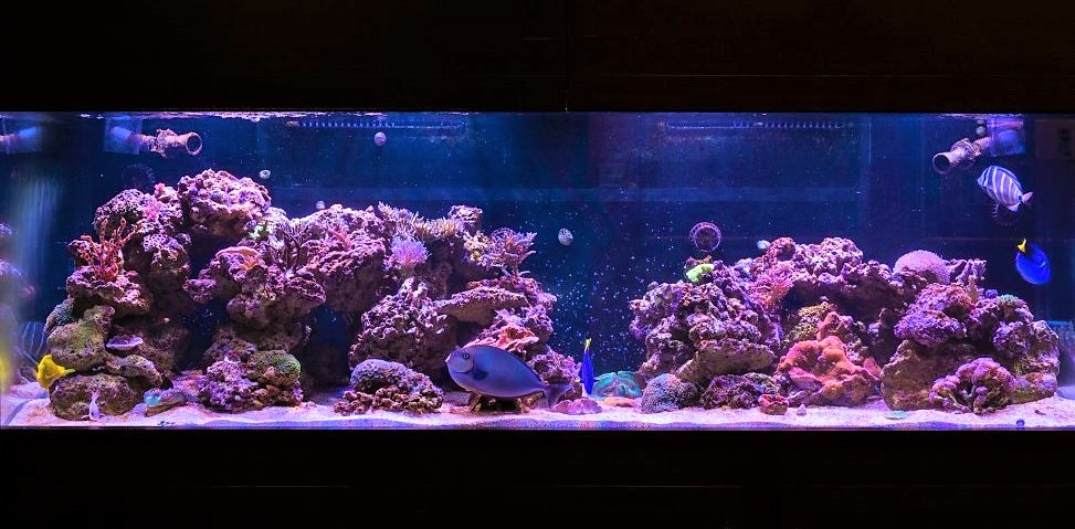 Intérieur d'un aquarium