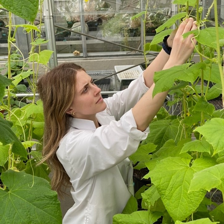 Jessica Gaudet, a biology graduate student at the University of Ottawa hopes to convert a fermentation waste product into a fertilizer that will help these cucumbers grow.