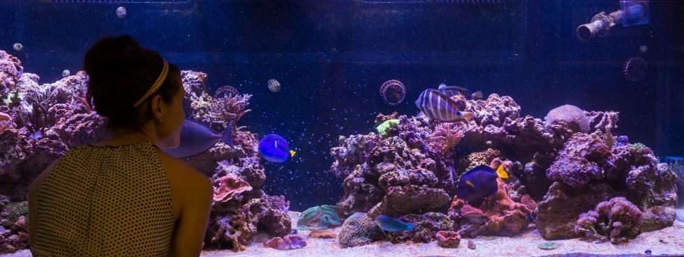 Une étudiante regarde les poissons tropicaux dans l'aquarium