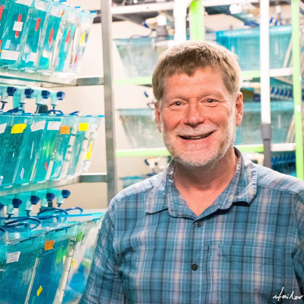 Professor Vance Trudeau stands among the zebrafish tanks wearing a blue and grey plaid shirt. The fish tanks bear red, white, orange and yellow tags.